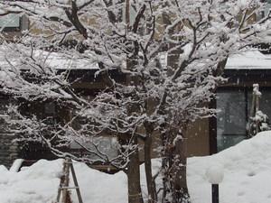雪情報と3月のイベント
