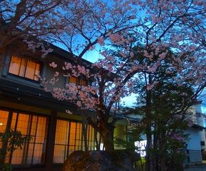 桜と第35回塩の道祭りのお知らせ