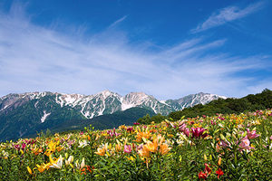 白馬岩岳ゆり園