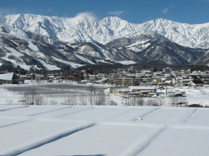 Today's Hakuba!!
