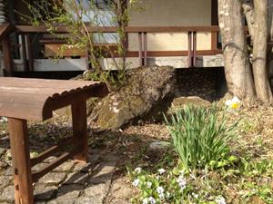 桜の知らせとゲレンデコンディション