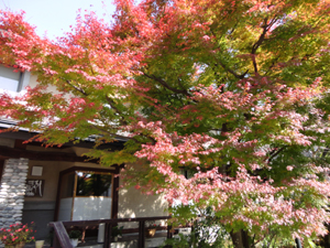 白馬山麓の紅葉